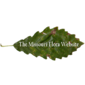 Missouri Flora Website icon