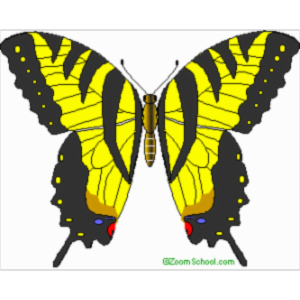 All about butterflies icon