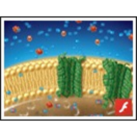 Molecules Move across the Cell Membrane icon