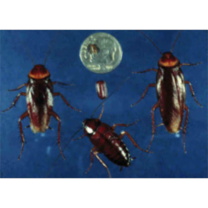 The Cockroach: A Model Sysyem icon