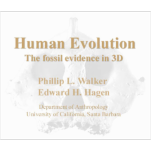 Human Evolution:  The fossil evidence in 3D