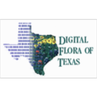 Vascular Plant Image Library - Digital Flora of Texas icon