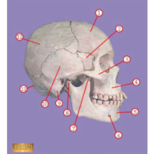 Bones of the Body icon