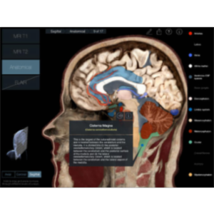 Radiology - Head App for iPad icon