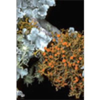 Lichens of North America icon