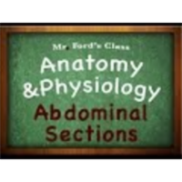 Introduction Anatomy Physiology (01:09): Abdominal Sections icon