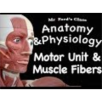 The Muscular System : Motor Unit and Muscle Fibers (09:03) icon