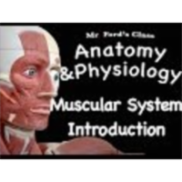 The Muscular System : Introduction to the Muscular System (09:05) icon