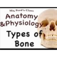 The Skeletal System : Types of Bone (07:03) icon