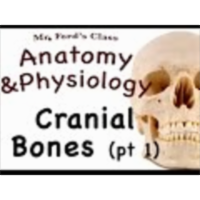 The Skeletal System : Cranial Bone pt 1 (07:05) icon
