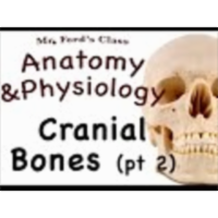 The Skeletal System : Cranial Bone pt 2 (07:06) icon