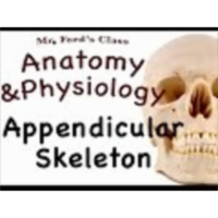 The Skeletal System : Appendicular Skeleton & Shoulder Girdle (07:13) icon