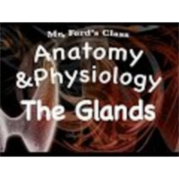 The Endocrine System : Glands of the Endocrine System (12:03) icon