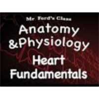 The Cardiovascular System : Heart Fundamentals (14:01) icon