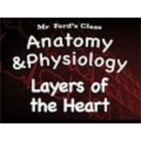 The Cardiovascular System : Layers of the Heart (14:02) icon