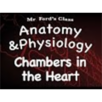 The Cardiovascular System : Chambers in the Heart (14:03) icon