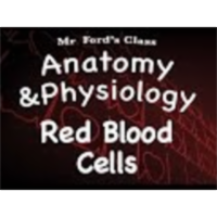 The Cardiovascular System : Red Blood Cells (13:04) icon