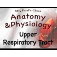The Respiratory System : Upper Respiratory Tract (16:02) icon