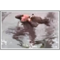 Overhead don of the BC in the water, demonstrating control at the end icon